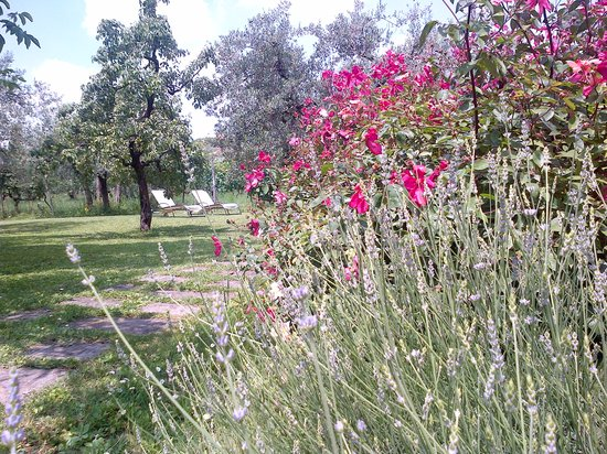 Villa Il Paradisino: scent of roses, lavander...and  confortable sun beds to lay just beforee to swimm:)