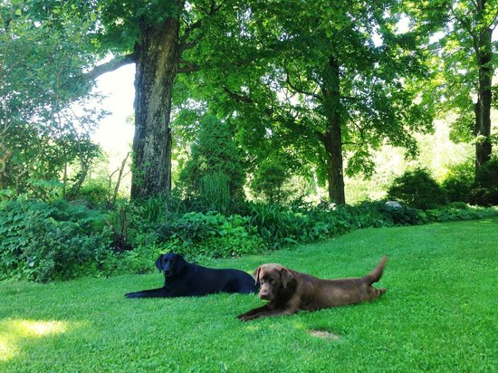 Steep Acres Farm Bed & Breakfast: The dogs