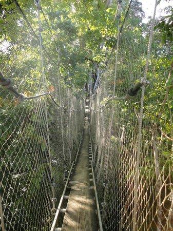 Falealupo Canopy Walk: the bridge