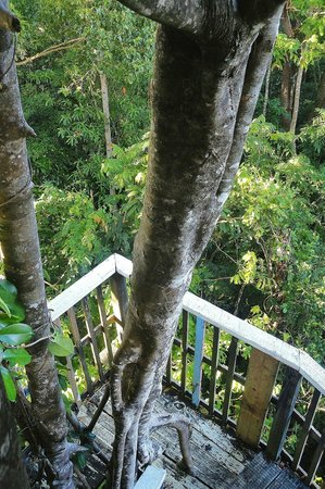 Falealupo Canopy Walk: nearly at the top