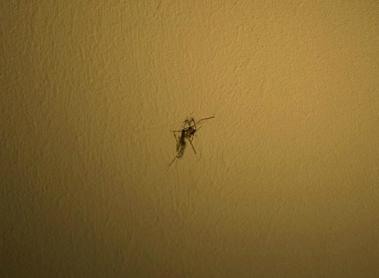 Holiday Inn Express Hasselt : Mosquito en la pared