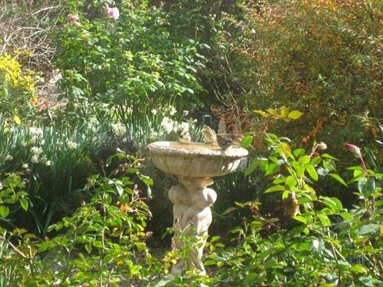 Country Pleasures B & B: front garden is popular with the birds