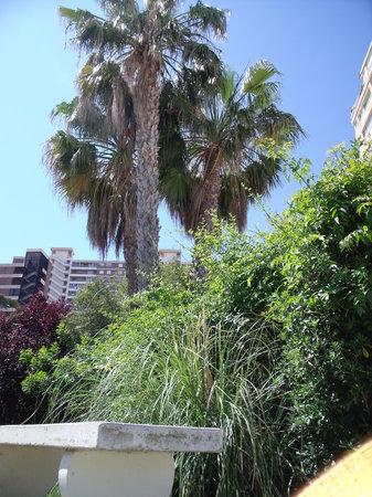 Apartamentos Concorde: pool surrounded by beautiful gardens