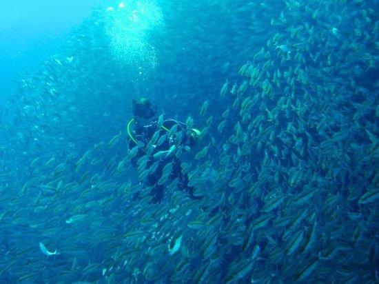 Sorido Bay Resort: So many fishes