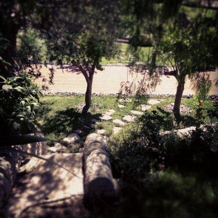 Agriturismo Il Granaio: Pathway to the pool