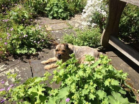 Stillingfleet Lodge Gardens: resident dog follows as personal guide!