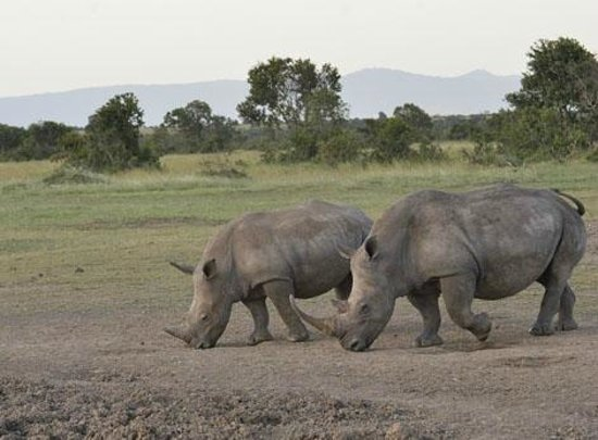 East Africa Adventure Tours and Safaris - Day Tours: Rhinoceros (Mt. Kenya)