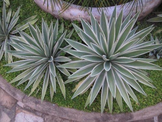 Hotel La Bocona: plants
