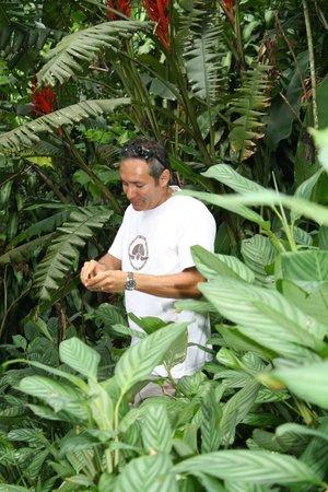 Finca Rosa Blanca Coffee Plantation & Inn: farm tour