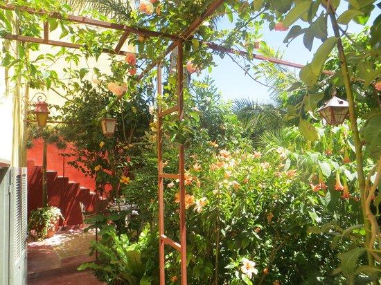 Dar Beldi : Lovely Gardens