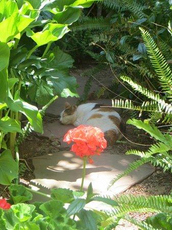 Dar Beldi : Giclette the garden cat!