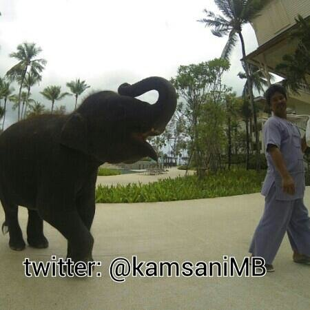 Outrigger Laguna Phuket Beach Resort: Cute baby elephant ready to strike a pose
