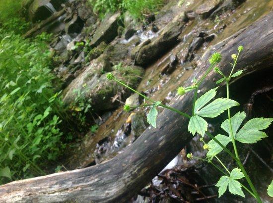Lovill House Inn: Waterfall