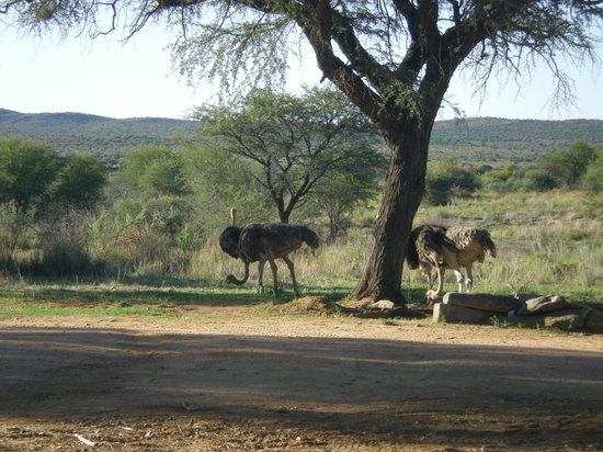 Auas Safari Lodge: Some guests checked in just before us