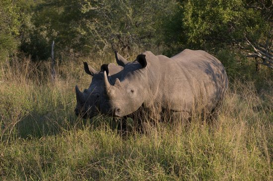 Arathusa Safari Lodge: Animals