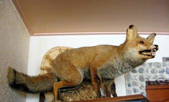Aux 3 Jean : Perché comme un renard