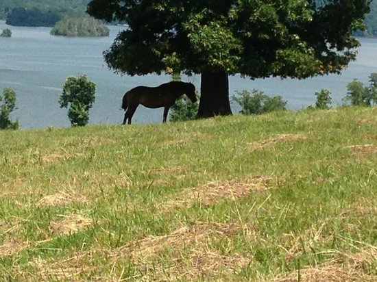 Whitestone Country Inn: One of the horses getting shade