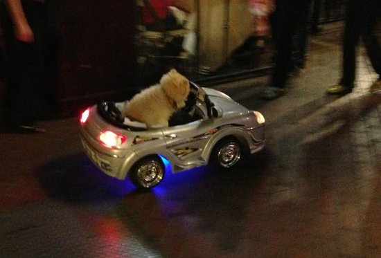 The Keating Hotel by Pininfarina: When did you see a dog driving a car before?