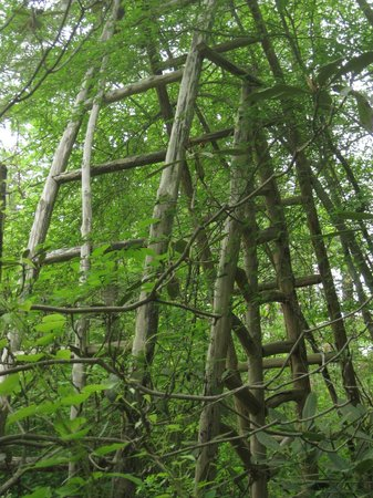 North Carolina Botanical Garden: Arch over the Storyteller's Chair