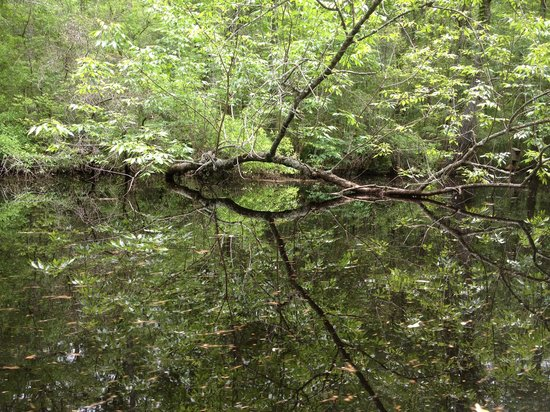 Nature Adventures Outfitters: Wamba river