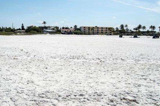 Flamingo Inn : The beach