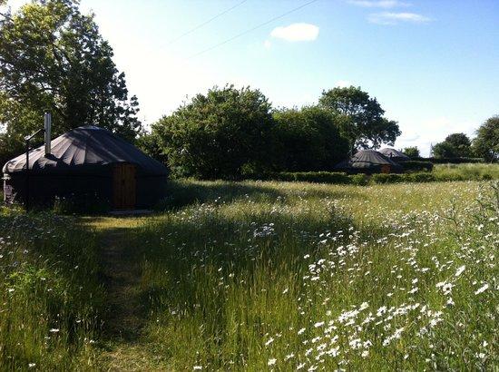 Suffolk Yurt Holidays: The Yurts