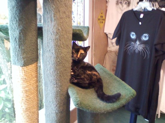 smoky mountain cat house live cats roaming the store