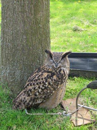 Old MacDonald's Farm: Hello Owl