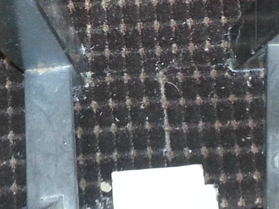 Quality Inn & Suites Reliant Park/Medical Center: they have not vacuumed in years it looks like this throughout