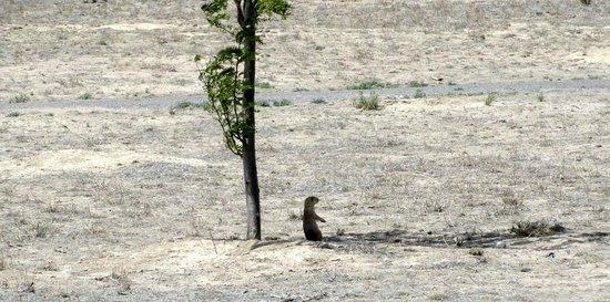 Historic Arkansas Riverwalk of Pueblo: Prairie dog in shade of tree
