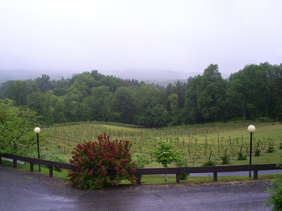 Six Mile Creek Vineyard : view of the vines