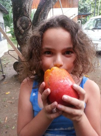 Mapi's Cabins: Mangoes on the property