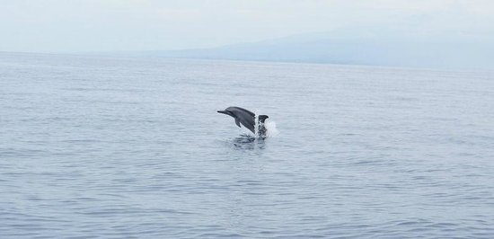 Bais Dolphin Watching-Day Tours