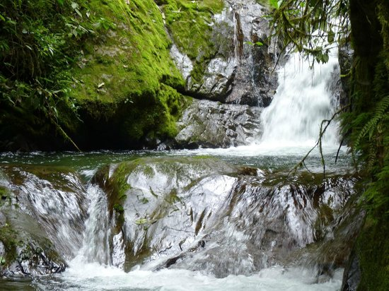 Reserva las Gralarias: Hike in our beautiful forest and along our waterways