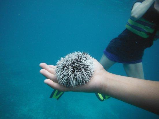 Creole Rock Water Sports : snorkel trip