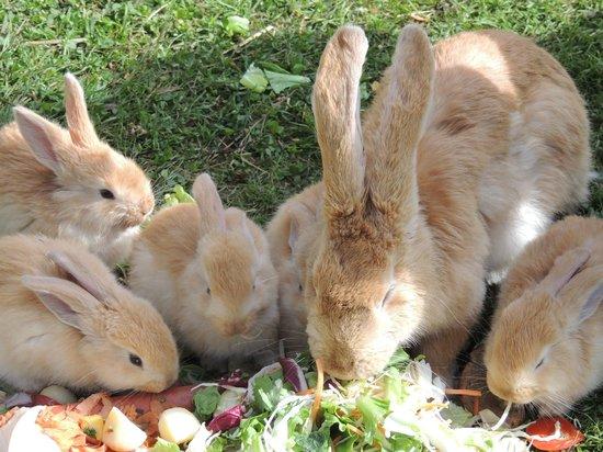 Wolterdinger Hof: Rabbits