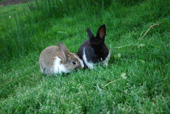 Rabbits jericho beach