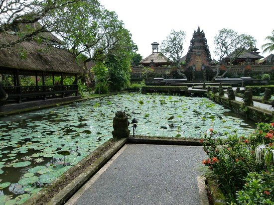 Saraswati Temple: The pond with water lily
