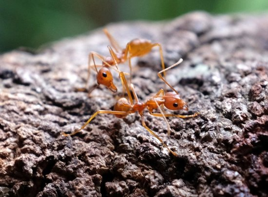 Cave Lodge: An ant photo I took on the main deck