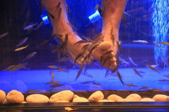 Cosy Beach Hotel: Внизу есть салон с рыбками,которые чистят пяточки)