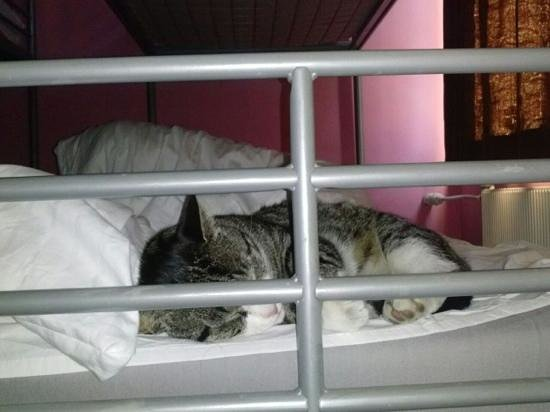 Bob's Youth Hostel : woke up with a cat in my bed?!?! seriously