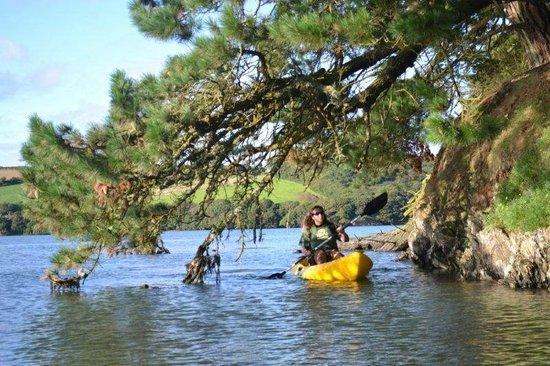 Helford, UK: Frenchmans Creek with Koru