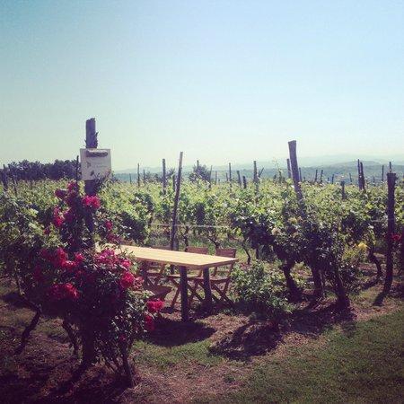 Cascina la Maddalena Bed & Wine: Tavolo nella vigna @Cascina la Maddalena