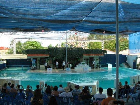 Samui Aquarium and Tiger Zoo: sea lion show