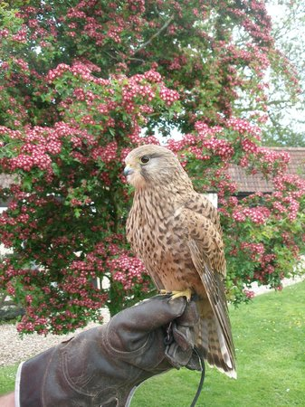 Yaraks Birds Of Prey Falconry Centre: kestrel and blooms