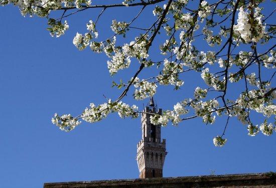 All'Orto de' Pecci: panorama sulla Torre del Mangia