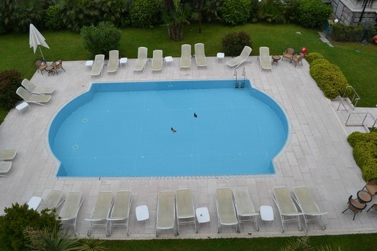 Grand Hotel Liberty: Hotel pool with two topless birds swimming.