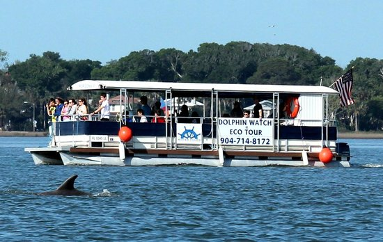 Dolphin Water Tours LLC : The dolphins love our boat!
