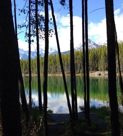 Herbert Lake: what a view!