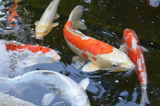 Princess Garden: Koi ponds